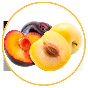 Fruta de hueso, ciruela